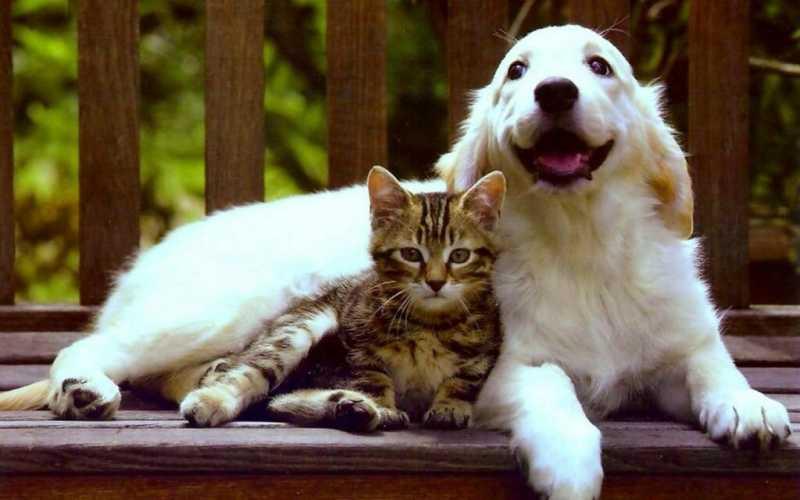 Почему проще взять в дом кошку, чем собаку?