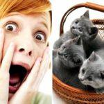 Айлурофобия или боязнь кошек, откуда она берется?