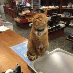 Смешные коты, которые поднимают настроение #187
