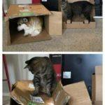 Смешные коты, которые поднимают настроение #183