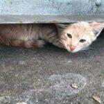 Спасательная операция - кот сидел под контейнером и боялся выйти, а девушка не хотела оставлять его там