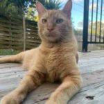 Кот рыл ямы во дворе своего и соседского дома, но был застигнут врасплох - вот до чего дружба с собакой доводит