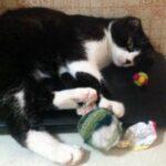 Как сделать вязаные мячики для кошек своими руками. Показываю, как я вяжу мячики крючком
