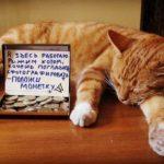 10 профессий, которые успешно освоили кошки