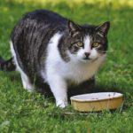 Как правильно перевести кота на другой корм?