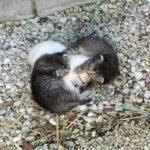 Два маленьких котенка тесно жались к маленькому белому комочку - они пытались согреть свою ослабевшую сестренку