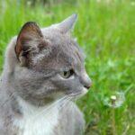 А Вы подскармливаете бездомных кошек?