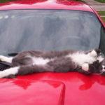 Смешные коты, которые поднимают настроение #184