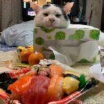 Смешные коты, которые поднимают настроение #182