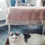 Пара решила забрать из приюта двух необычных котов, которых, скорее всего, никто и никогда бы оттуда не забрал