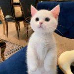Смешные коты, которые поднимают настроение #185