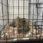 Разлука длиною в 11 лет - потерявшийся много лет назад кот нашелся и обнял свою хозяйку лапками