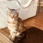 Этот кот был самым одиноким существом на свете и никого не любил, пока в доме не появилась она