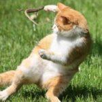 Смешные коты, которые поднимают настроение #190