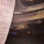 Девушка потратила всю ночь, чтобы найти плачущего котенка, но чтобы его спасти, потребовалось 7 человек и еще 6 часов