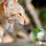 """Ошеломляющее разочарование или почему кошки """"щебечут""""?"""