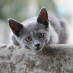 Правда ли, что кошки обладают мистическими способностями?