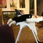 Смешные коты, которые поднимают настроение #177