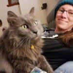 Кот часто уходил гулять и пропадал на долгие часы - однажды он возратился домой с запиской на ошейнике