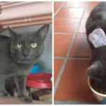 Пушистые аферисты: истории котов, ведущих двойную жизнь