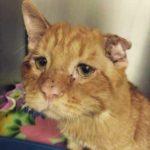 Порою час решает все – кот был спасен от усыпления и уже через час невероятно преоброзился в своем новом доме