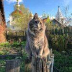 Смешные коты, которые поднимают настроение #189