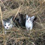 Милая история о девушке, за которой увязались 10 бездомных котят – они бежали за ней не из-за голода, а в надежде найти любовь