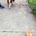 Ну возьмите меня - бездомный рыжий котенок проявил настойчивость и упорство, теперь он живет в доме с любимой хозяйкой