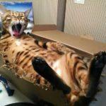 Смешные коты, которые поднимают настроение #179