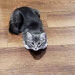 Эта кошка не могла без своего хозяина и сильно грустила, когда он уходил на работу - мужчина нашел выход и теперь она счастлива