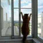 Смешные коты, которые поднимают настроение #191