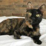 Кошка из последних сил пыталась выкормить семерых своих котят, но серьезно заболела - их спасла добрая девушка