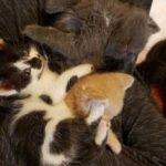 Хозяин фермы решил прогнать кошку и котят, которые нашли здесь приют, но женщина дала кров этой кошачьей семье и забрала домой