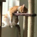 Смешные коты, которые поднимают настроение #192