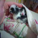 Девушка обнаружила у дверей своей квартиры сверток ткани с завернутыми в него крохотными котятами