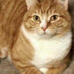 Кота отдали в приют только за то, что он был очень ласковый – зато теперь у него есть настоящие любящие хозяева и друг