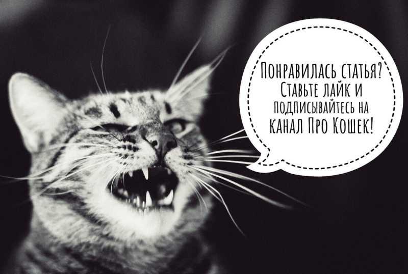 Почему кот ходит по пятам за хозяином?