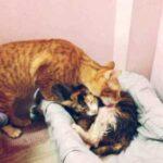 Невероятно трогательная любовь и забота за родившей кошкой и котятами молодого папы-кота - людям стоит поучиться