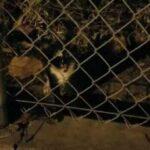 Начальство запретило подкармливать маленькую голодную испуганную кошку - но один из сотрудников не дал ей пропасть