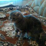 """""""Добрые"""" хозяева выставили на мороз кота, который заболел, чтобы не тратиться на его лечение - но он выжил вопреки всему"""