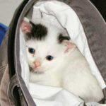 """""""Бородатый"""" кот Гарри - одна из самых известных """"звезд"""" в интернете, поразивший всех своей яркой эмоциональностью"""