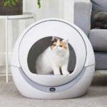 Самоочищающийся лоток и другие умные гаджеты для кошек