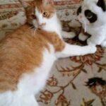 Пара взяла кошку в приюте, а та оказалась с «сюрпризом» - в результате у молодых людей стало целых 8 питомцев