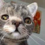 В приют принесли котенка с необычной внешностью - он стал самым дружелюбным питомцем, обрел кров, тепло и друзей