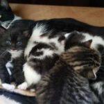 Молодой парень проснулся и обнаружил под своей кроватью кошку с четырьмя котятами – но у него не было питомцев
