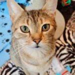 Кошку забрали в приют, но она не находила себе места и плакала – оказалось, на улице ее ждали меленькие голодные котята