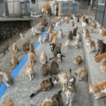 """Жители """"кошачьего"""" острова Аосима попросили у людей помощи для котиков - вскоре остров был завален кошачьими кормами"""