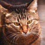 Где и с кем оставить кота на время отпуска?