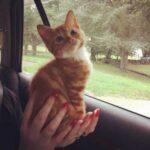 Спасенного с улицы котенка отлично кормили, а он все не рос и не рос - в чем дело, выяснилось лишь спустя 7 месяцев