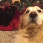 Кот и собака прожили всю жизнь вместе, а когда собаки не стало, кот не находил себе места - однажды он нашел ошейник пса